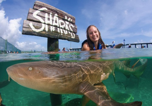 are there sharks in the waters off punta cana?